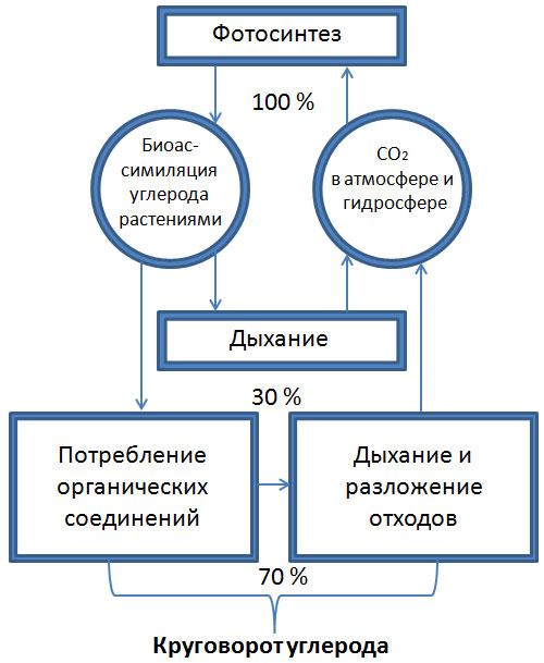 Схема углерод в природе 823