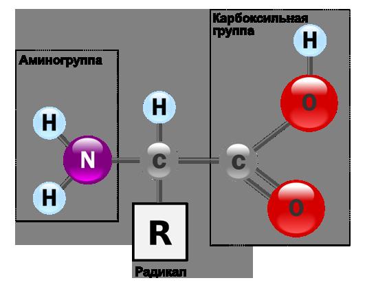 Структурные формулы аминокислот