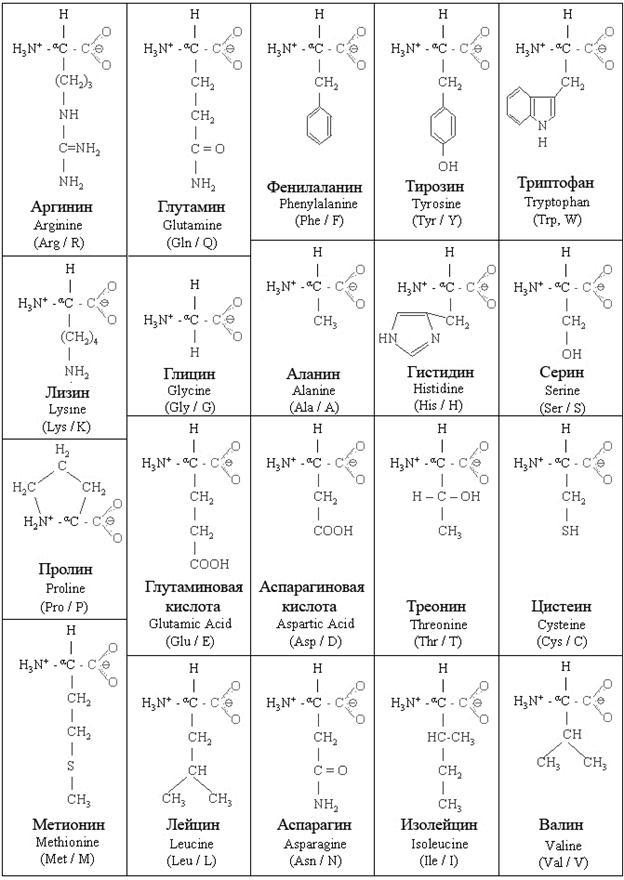 Формулы 20 аминокислот